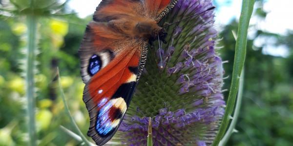 Ga lekker vlinderen!